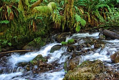 Fern Bordered Cascade