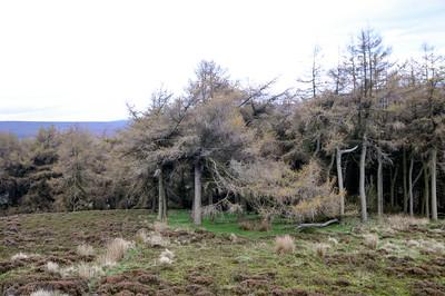 HOBBIT TREES
