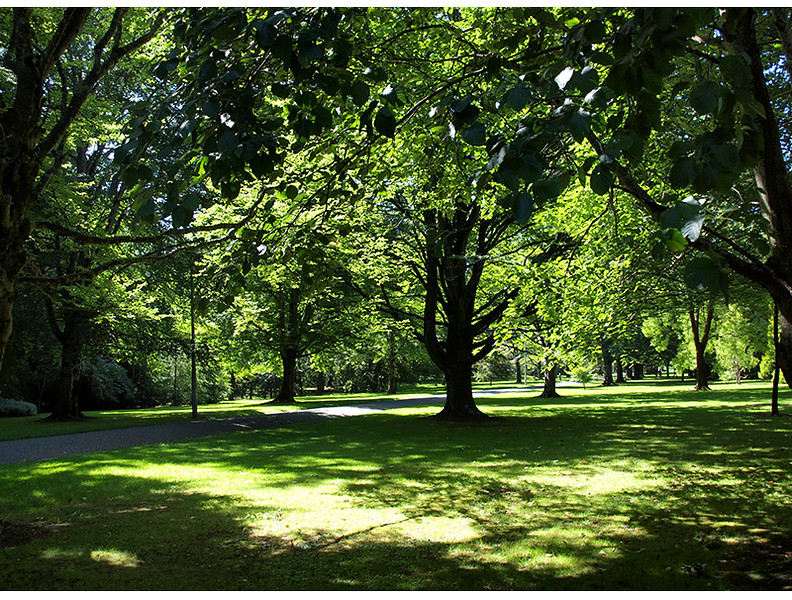 Shadows Queens Park invercargill NZ