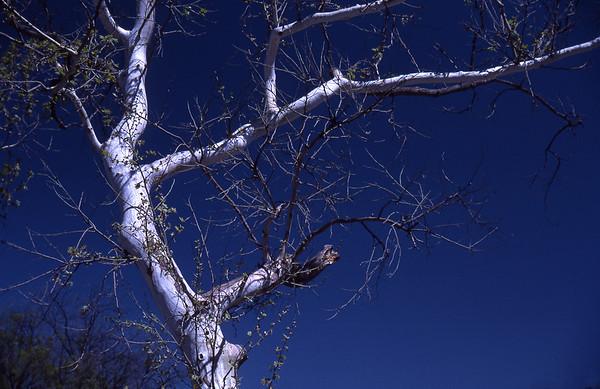 Tree & Blue Sky