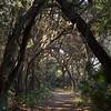 Boyd Hill Nature Preserve Trail
