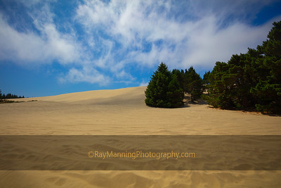 South Jetty Dunes