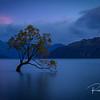 The Wanaka Tree New Zealand