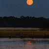 Marsh Moonset