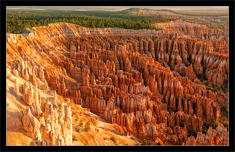 Canyon Rim Sunrise  The warm light from sunrise falls on the canyon rim and the many tufa formations below, enhancing the spectacular oranges in the rocks.  Bryce Canyon National Park, Utah  03-SEP-2004