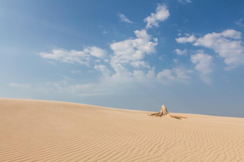 Sand dunes and tree stump