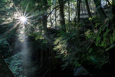 Cedar Falls Light