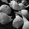 Henlopen Shells