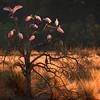 Spoonbill Tree