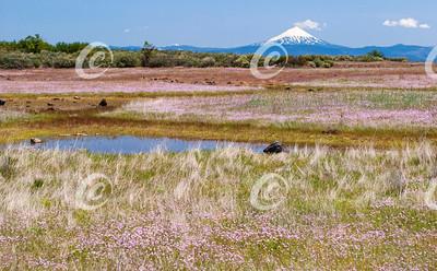 Seasonal Pond with Wildflowers