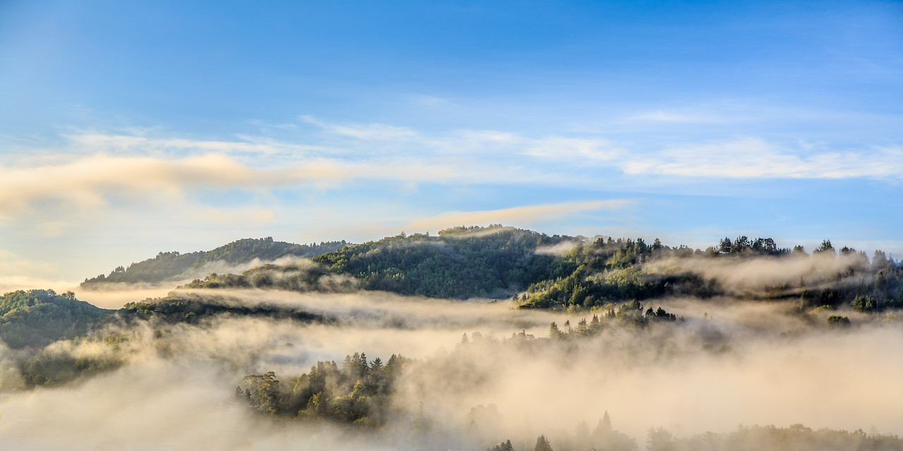 Marin Morning Mist