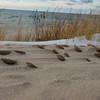 Sand Coins