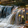 Autumn Leaves in River Philip, Nova Scotia