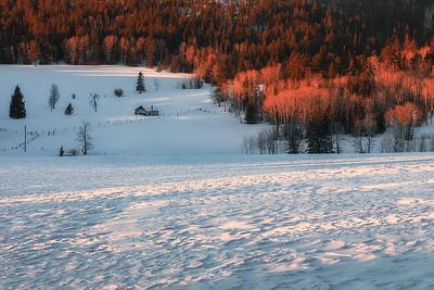 A Winter's Tale.