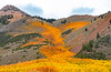 Fall Colors in Bishop Creek Canyon