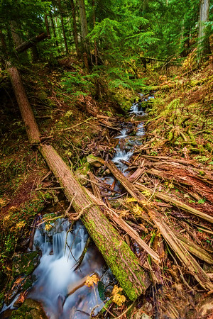 Stream in the Ancient Forest