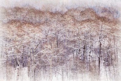 Snowy Trees Limited Edition by Kat Walsh Photography