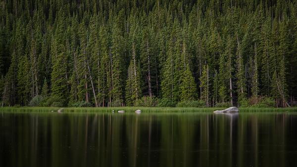 Forest Shoreline