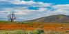 wildflowers in Antelope Valley