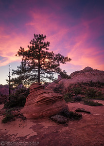 Twilight in Zion