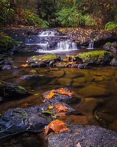 Autumn Colours, creek at Sherman Rd Trail