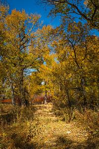Fall in Granite Creek/Dells