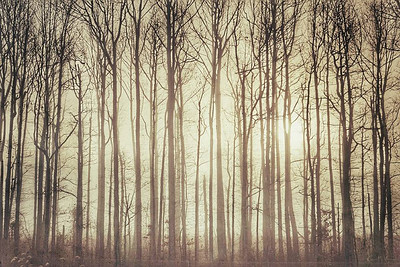 Treescape Limited Edition by Kat Walsh Photography