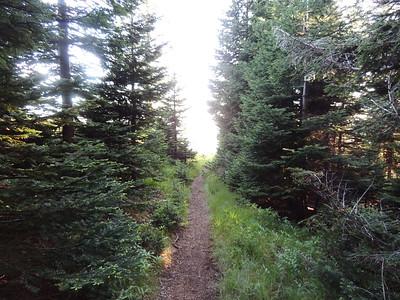 Mary's Peak, Meadow Ridge Trail