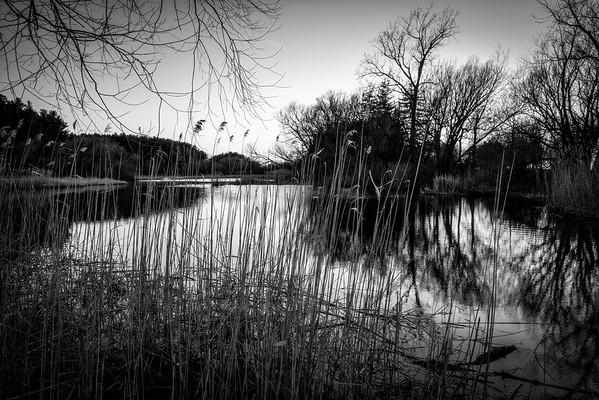 Hamlin Park Pond