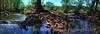 Blanco River Pools & Cypress Roots