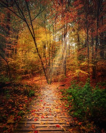 Fall Colours in Pelham