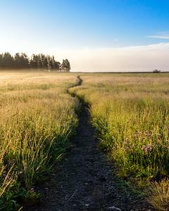 Path in Yellowstone