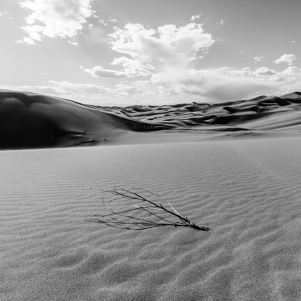 5-4-17 Desert Contrast
