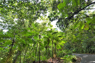 Gigantic Ferns