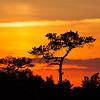 sunset on the marsh landscape