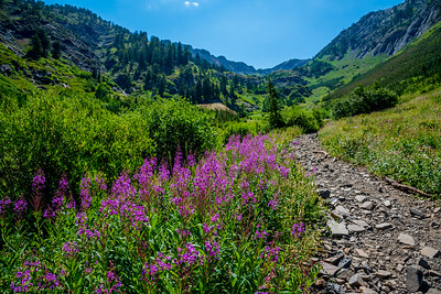 Utah Mountain Trail in Bloom