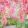 Walk in the Garden