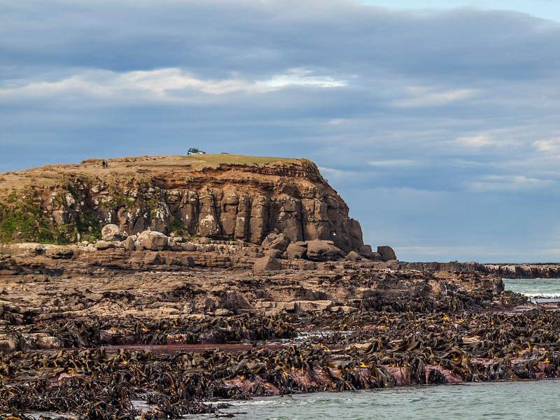 Curio Bay  The Catlins NZ