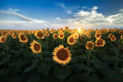 Field of Suns.