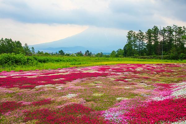 After the rain, Mishima Garden, Niseko, Hokkaido, Japan