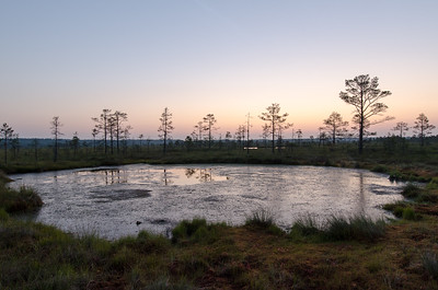 Morning in the bog