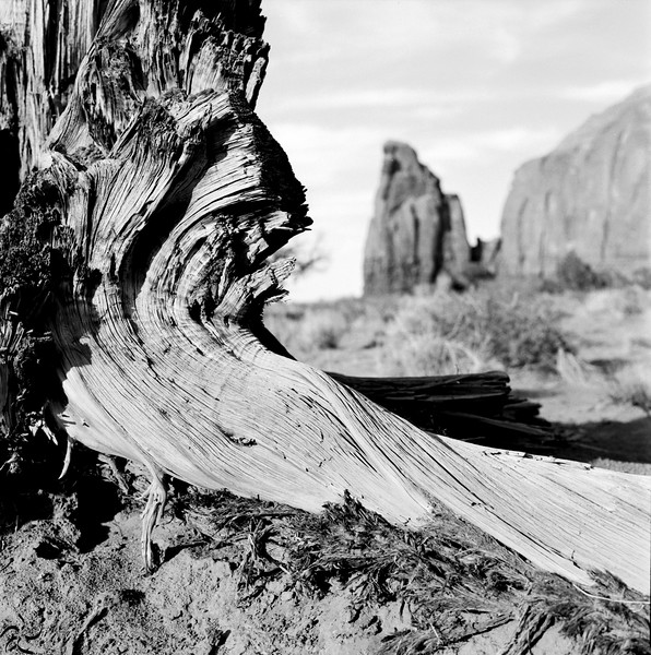 Dead tree - Monument Valley - USA