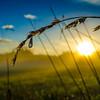 Dewdrop Sunnymere Sunrise