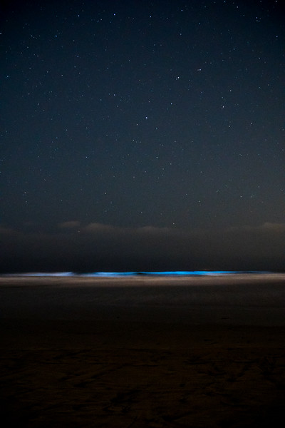 Bioluminescence, Del Mar California