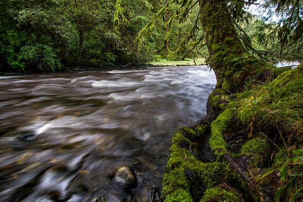 Salmon Bay Creek 2