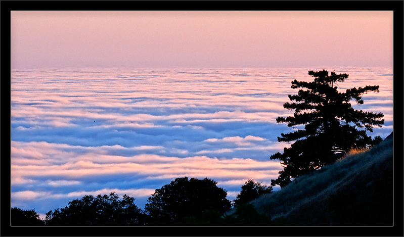 Marine Layer and Trees at Sunset  As the sun sets, the summer marine layer  pushes inland toward the Santa Cruz mountains and foothills. The low clouds blanket the Pacifc Ocean and coast 2000 ft. below.  Russian Ridge Open Space Preserve Redwood City, California  10-JUL-2010
