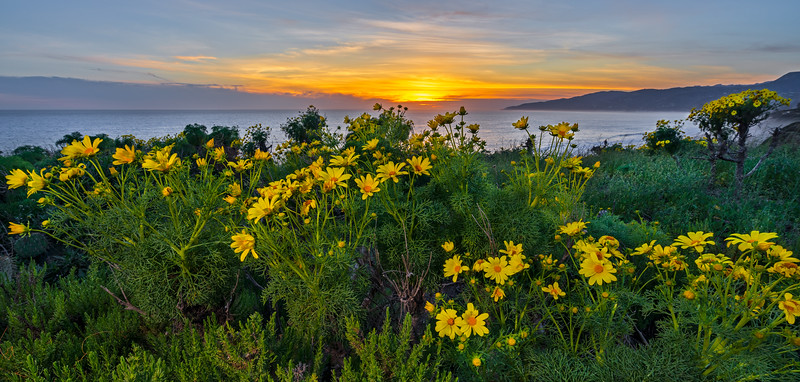wildflowers sunset