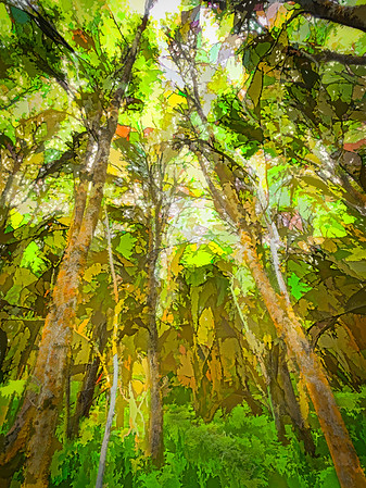 Scrub Oak Forest Photo Painting