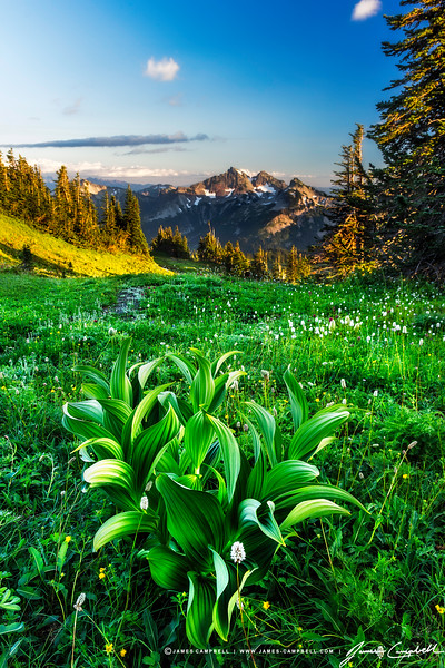 A view of the Tatoosh Mountain Range as seen from the Golden Gate Trail on Mount Rainier.