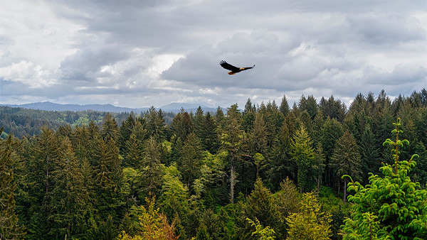 flight over the Coastal Forest